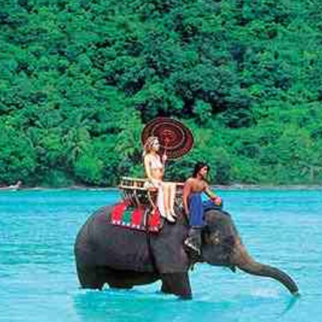 India.. Elephants.. Love