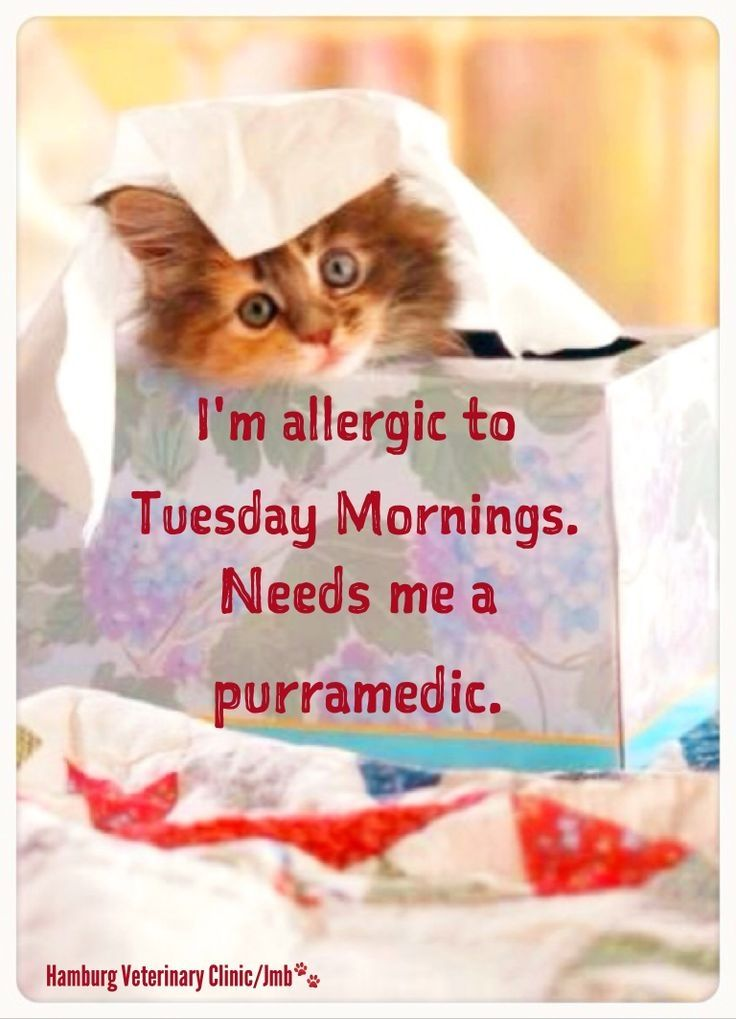 Allergic To Tuesday Mornings Tuesday Greetings Tuesday Quotes Funny Tuesday Morning