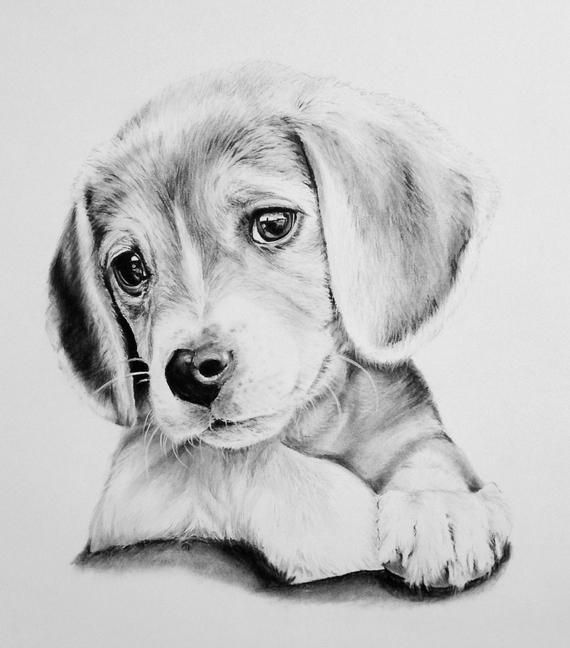 Photo of Custom Charcoal Portrait, 8×10 in. Drawing, commissioned …