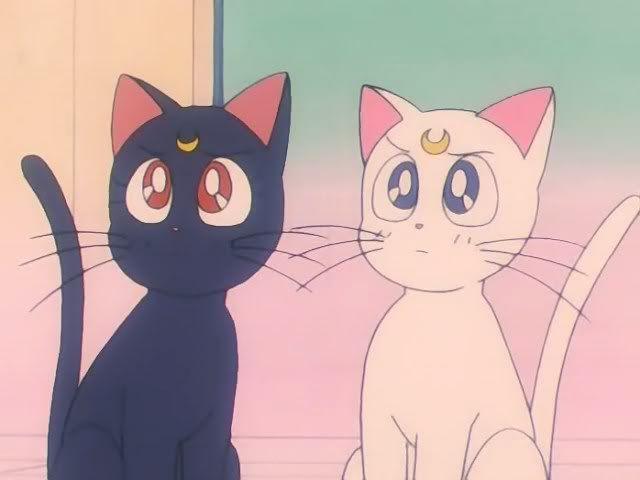 Luna And Artemis Sailor Moon Cat Cute Anime Cat Sailor Moon