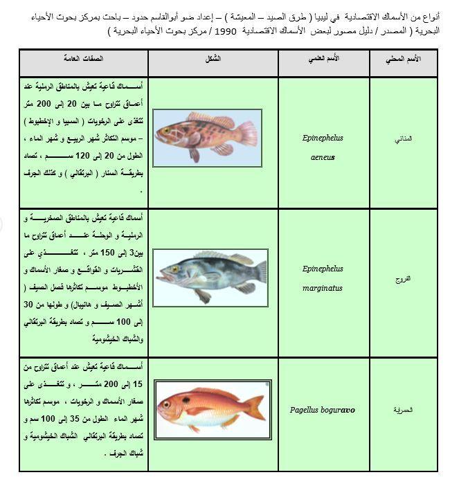 صور من دليل الأسماك الليبية 1 Traditional Food Friendly Food Market