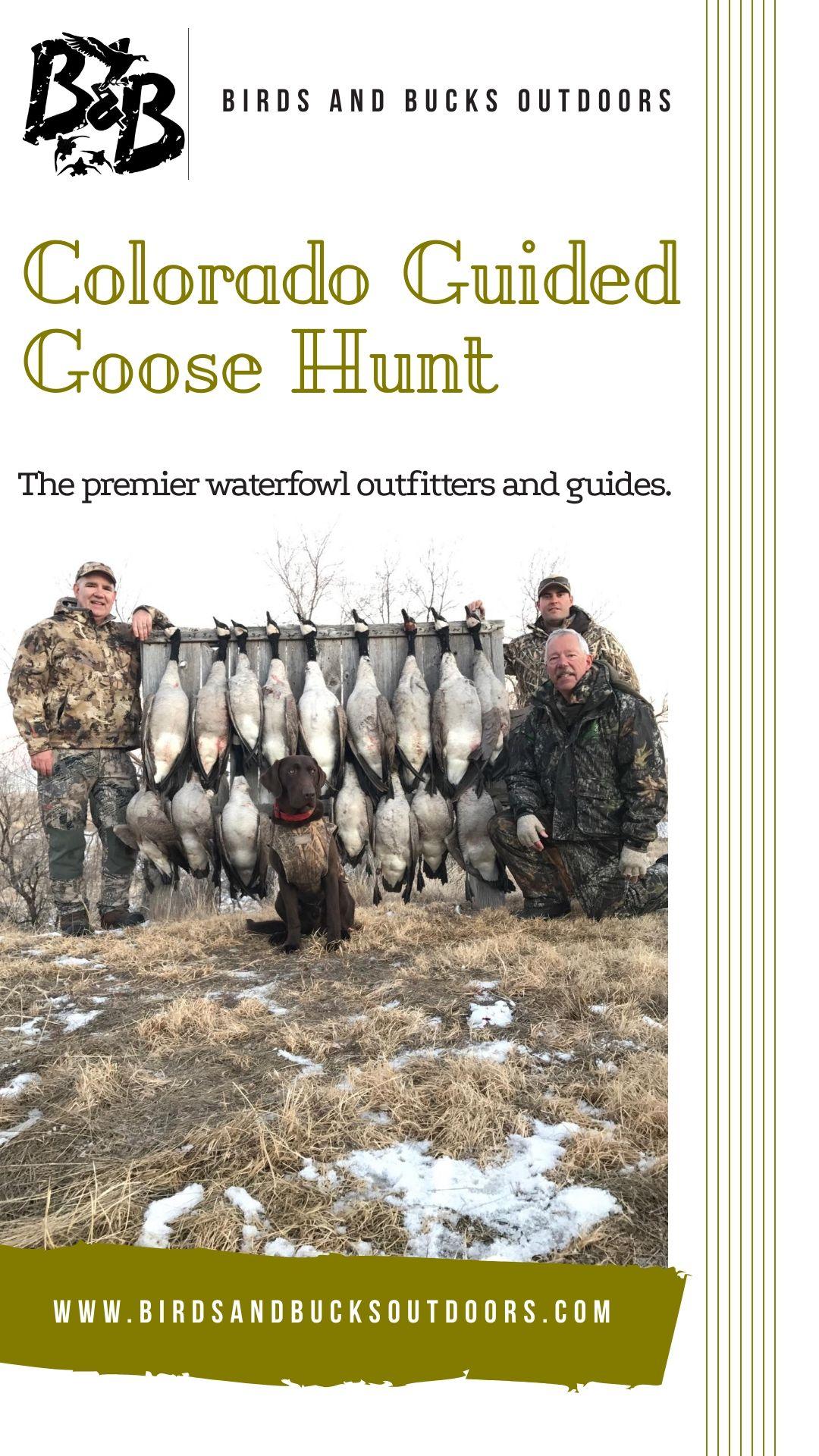 Colorado Goose Hunting Goose hunting, Hunting guide