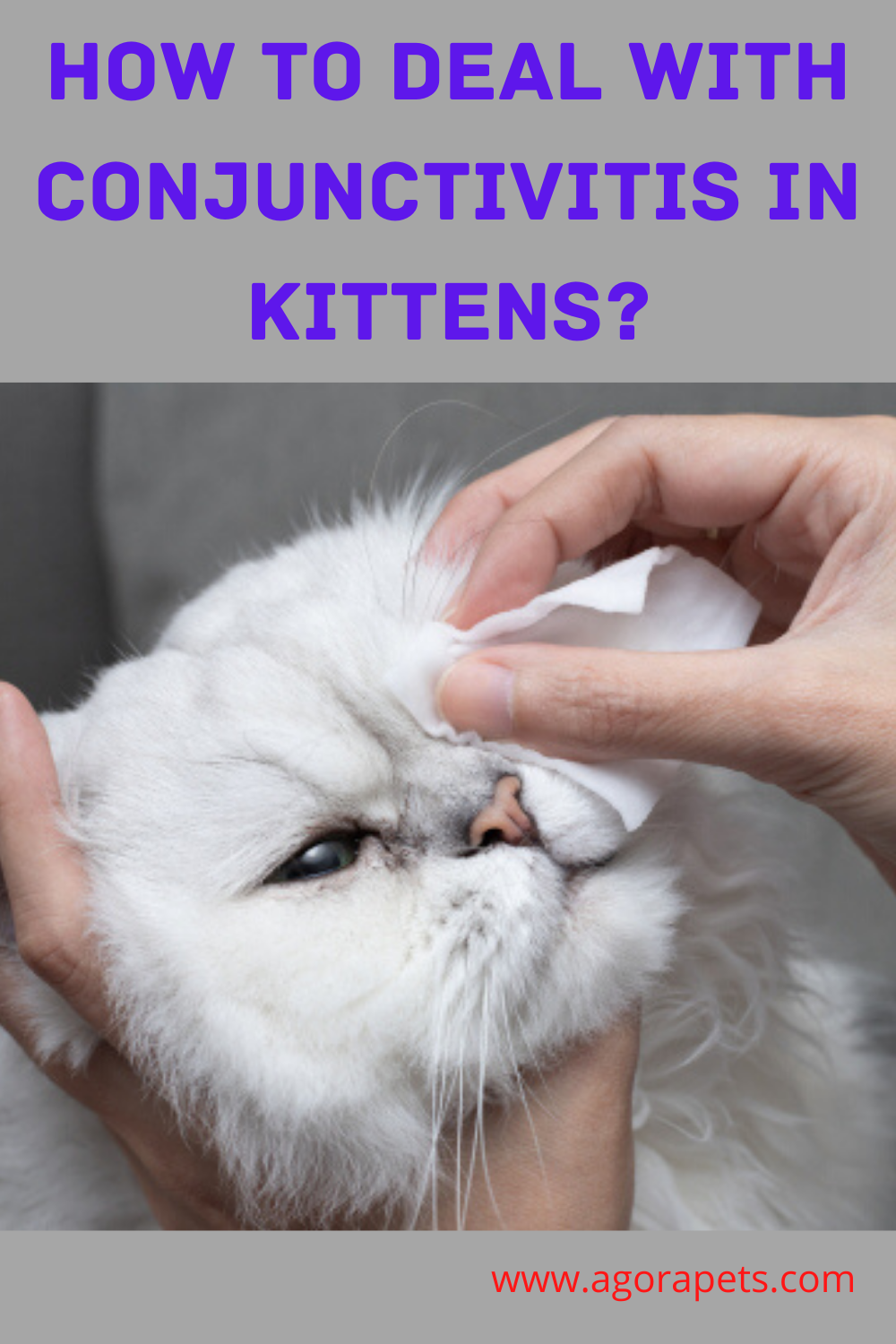 How To Deal With Conjunctivitis In Kittens In 2020 Kitten Eyes Conjunctivitis Treatment For Conjunctivitis