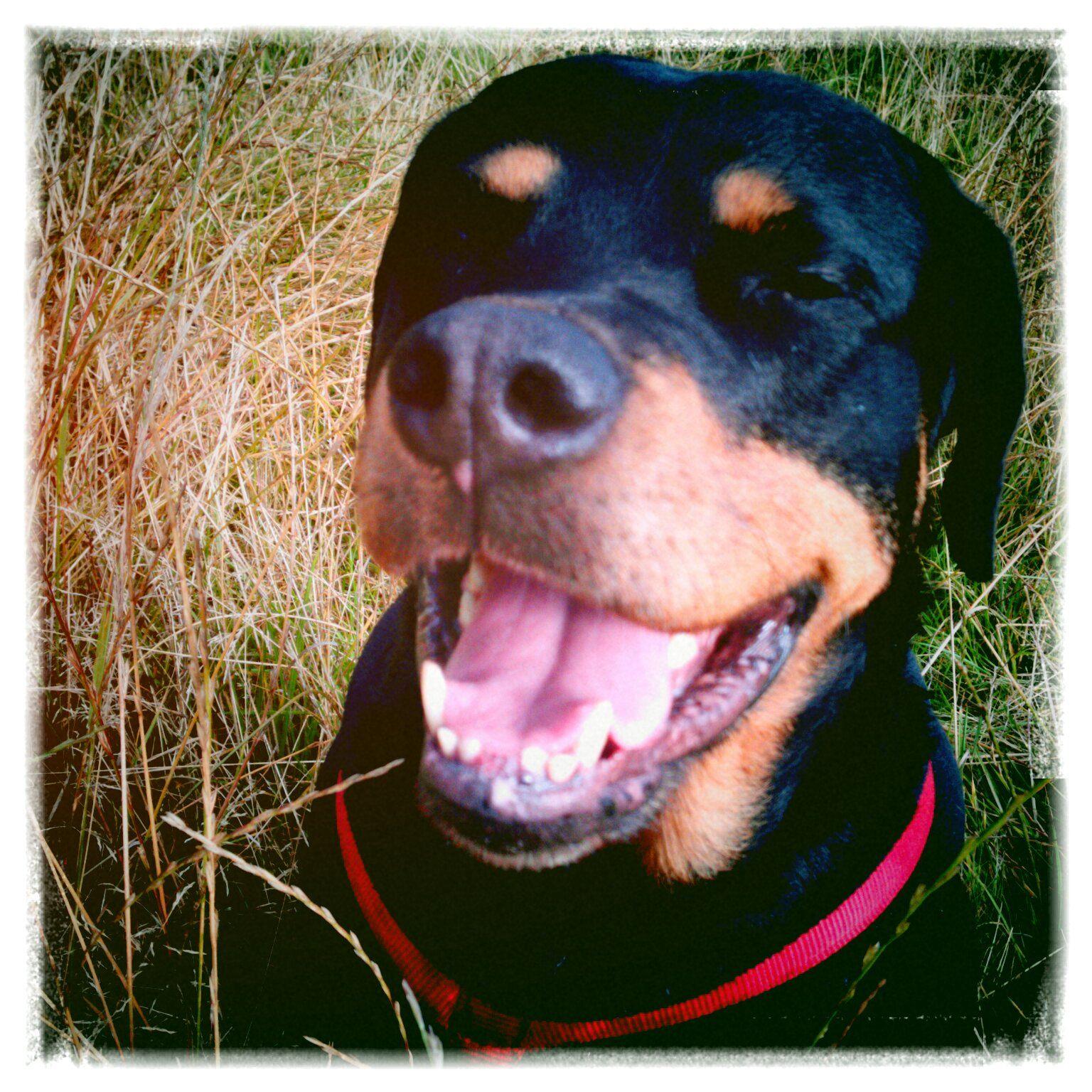 Lost my teeth, still grinning!