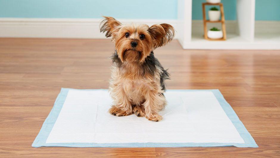 Senior Dog Puppy Training Potty Pad Training Basics Dog Potty