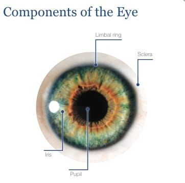 Another New Mandela Effect Regarding The Human Anatomy The Limbal
