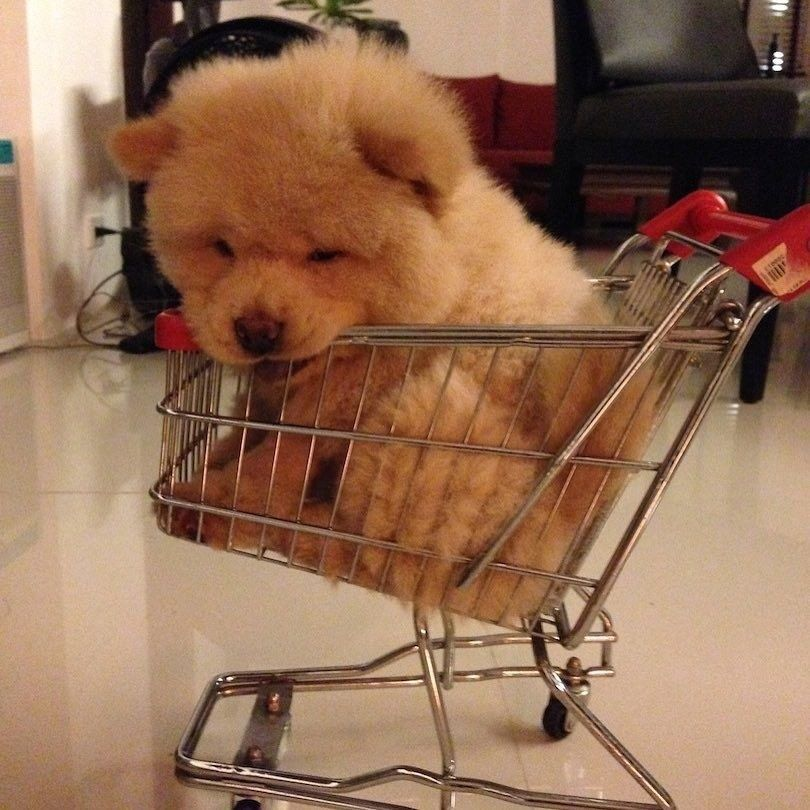 Must see Bear Brown Adorable Dog - dd8502829b598312a9a5e76ca1e4509e  Photograph_718589  .jpg