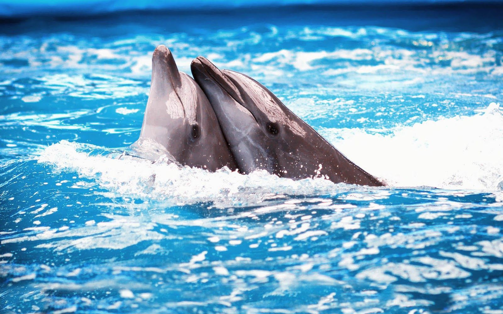 Dolphins Wallpapers HD Animal Wallpaper Tiere