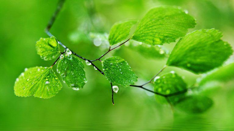 Green Natureal Desktop Wallpapers Green Nature Wallpaper Desktop Wallpaper Art Rain Wallpapers