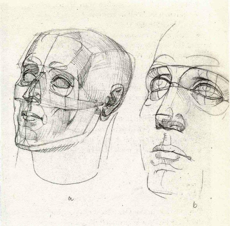 Анатомия лица человека для художников картинки