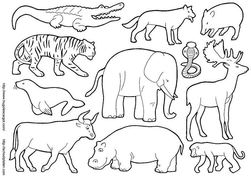 animales para colorear  El reino animal  Pinterest  Colorear