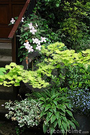 Plants in the shade position on the garden place in front of the ...