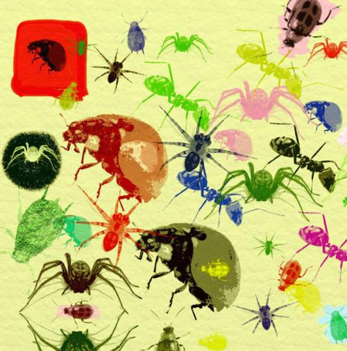 stencilled insect sheet