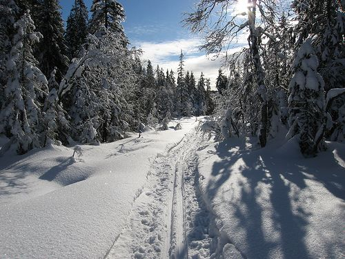 most of Oslo is made up of forest. in winter, the krokskogen area can look like this.