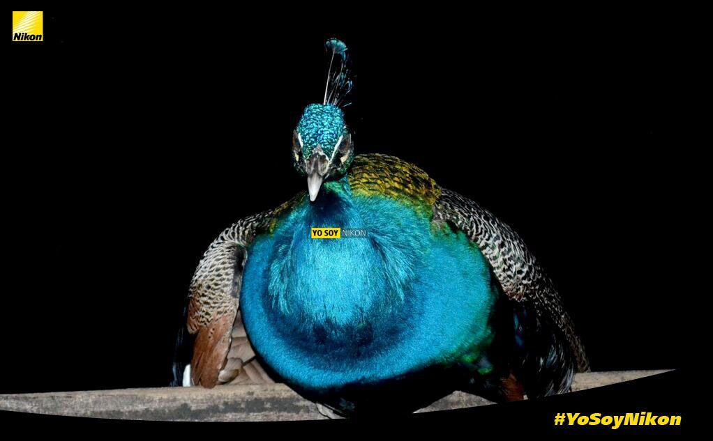 Frank Guite #YoSoyNikon, Nikon D3100