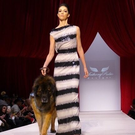 Sophisticated Pup: Models and dogs work the catwalk (pun intended) at Anthony Rubios show. http://ift.tt/NxW167 by fashionnewslive