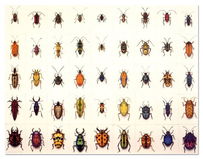 1000 images about Bugs and creepy things on Pinterest Ants Local news and  Java  1000. Small Bugs In House