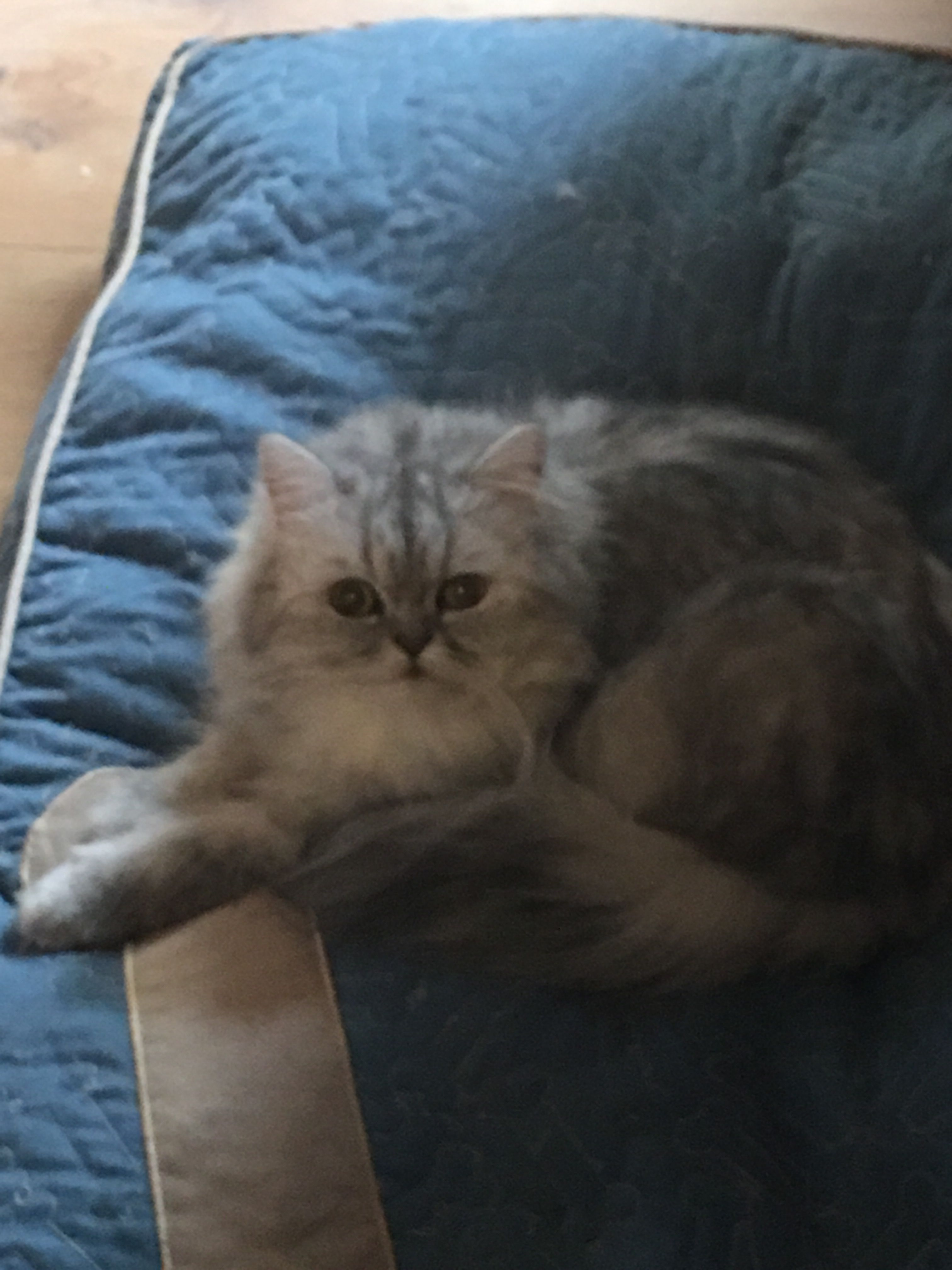 This Is London A Young And Quiet Cat Who Has Had 2 Litters Of Kittens Leading Up To 11 Cats Her First Litter Is Quiet Cat Kittens Cats And Kittens