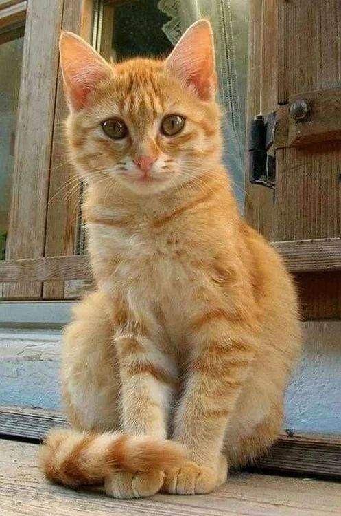 Orange Cats Image By Bobby Schaefer Schaef Designs On Cat