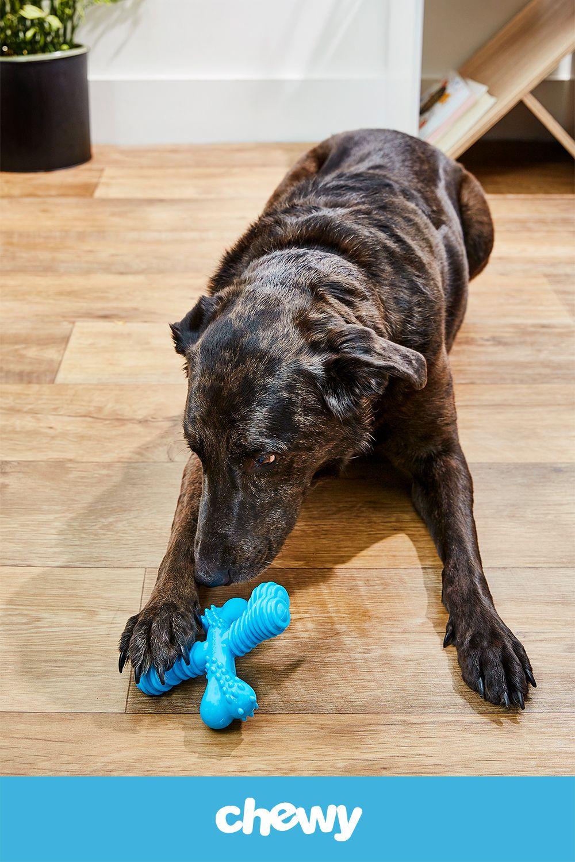 Pin On Dog Toys