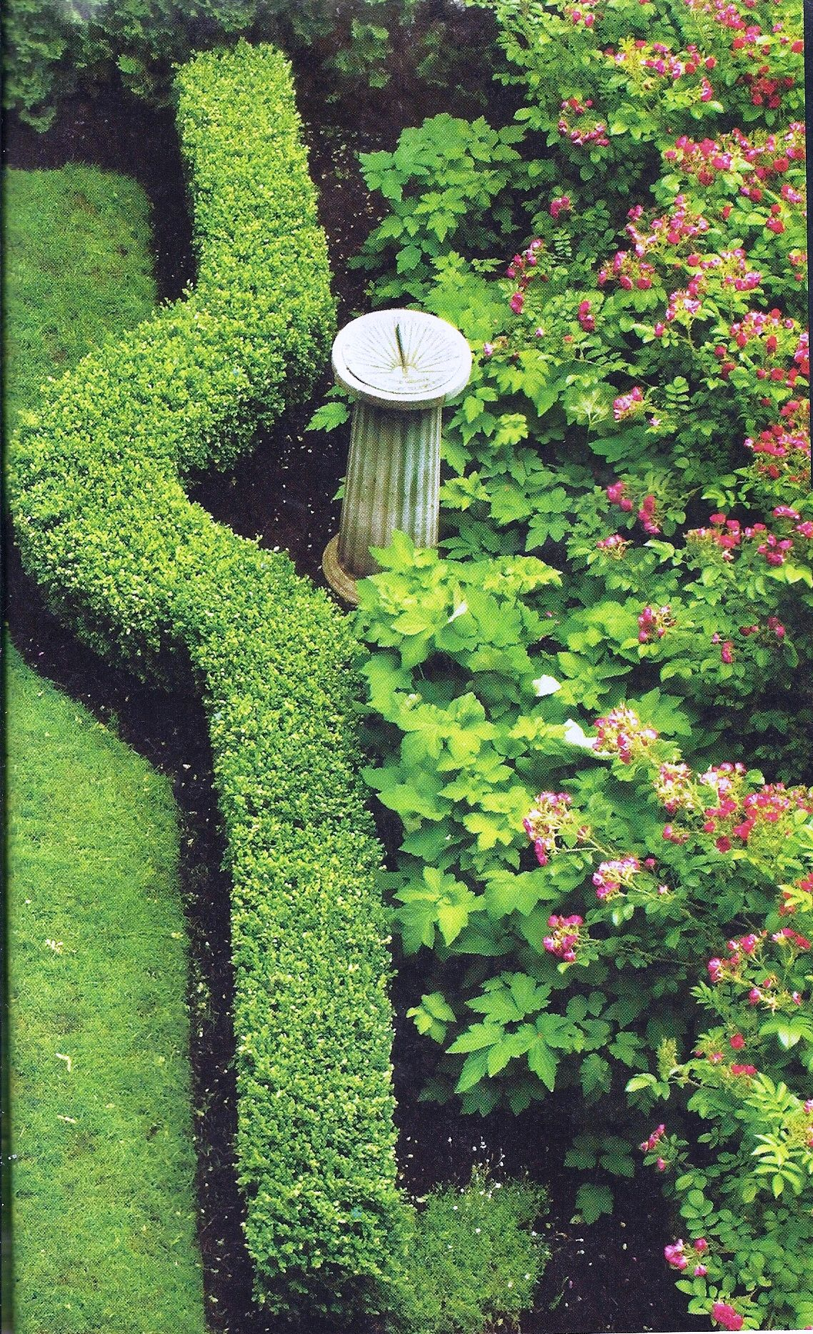 A Boxwood Hedge Accentuates The Curves, While Taller September Charm