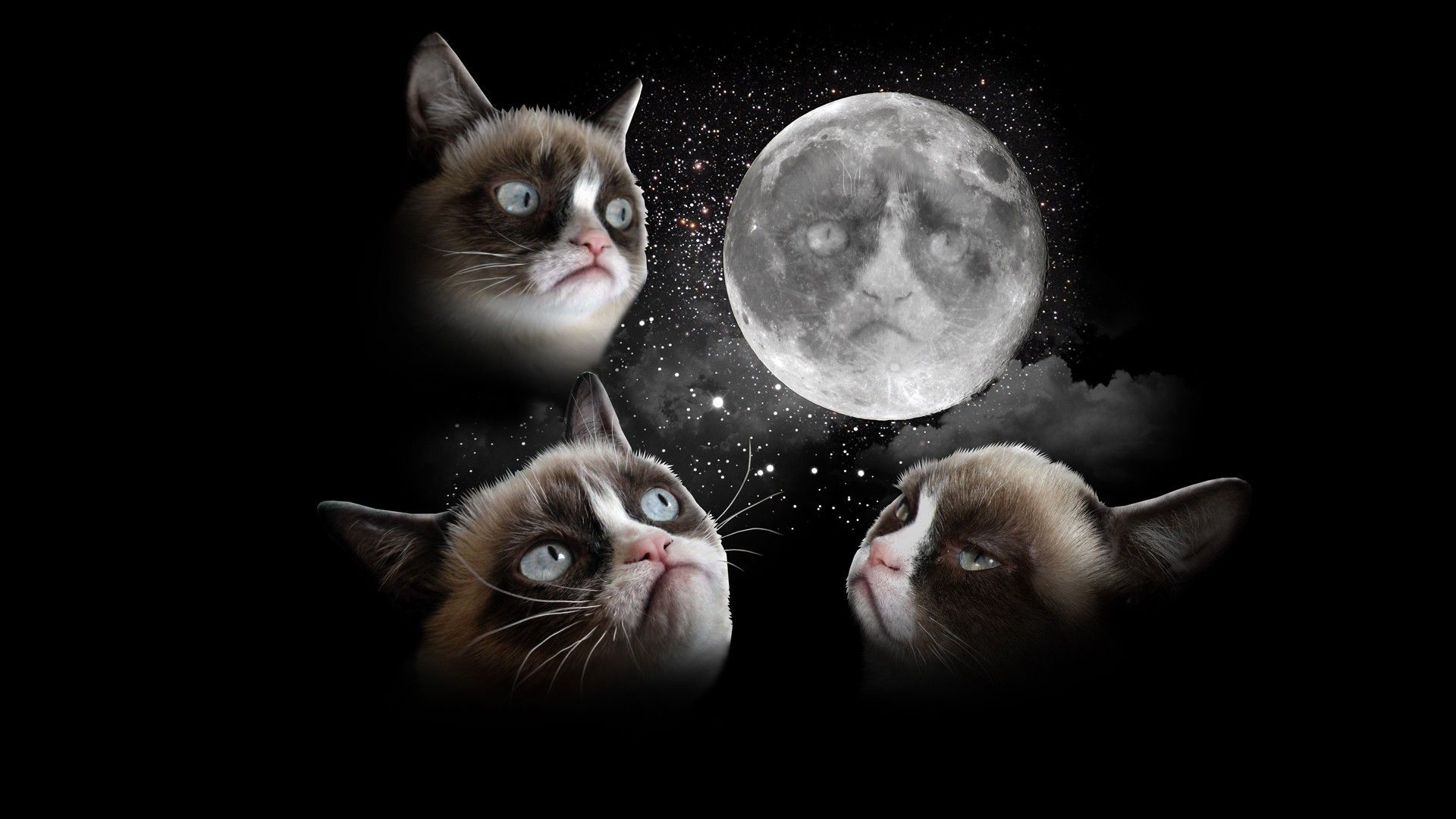 Black Grumpy Cat Pictures Wallpaper Delicious Dinners Jpg 1920x1080 Wallpapers Tumblr Christmas Memes Catpictures Grumpycat