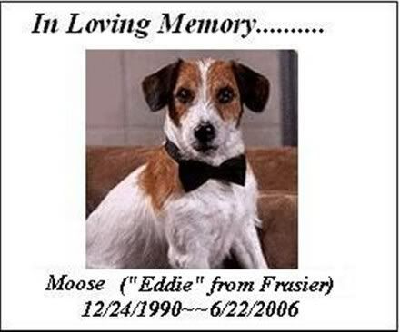 """I love the dog, """"Eddie"""" in the sitcom Frasier.  Jack Russell"""