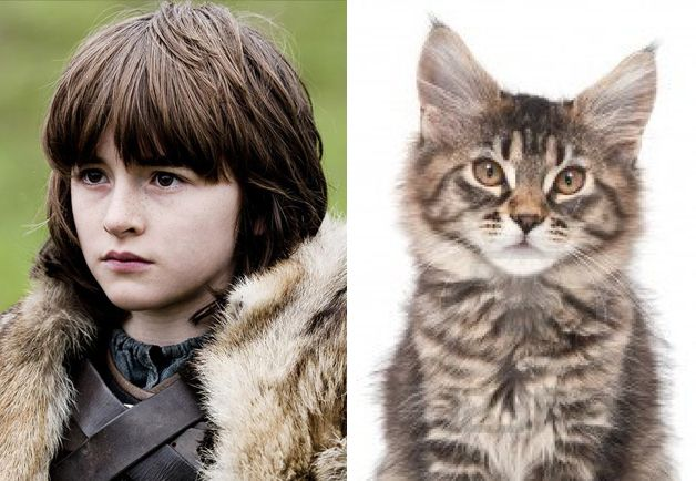 Game of Thrones cats