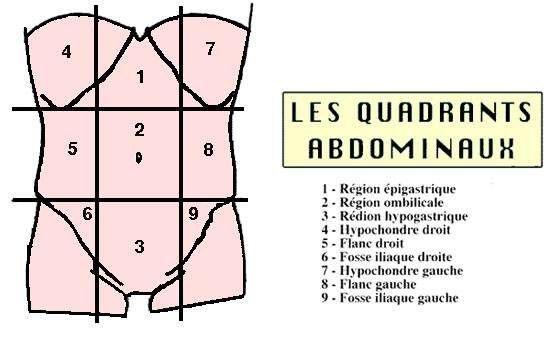 ANATOMIE DE L\'ABDOMEN . La paroi abdominale est divisée en 9 Zones ...