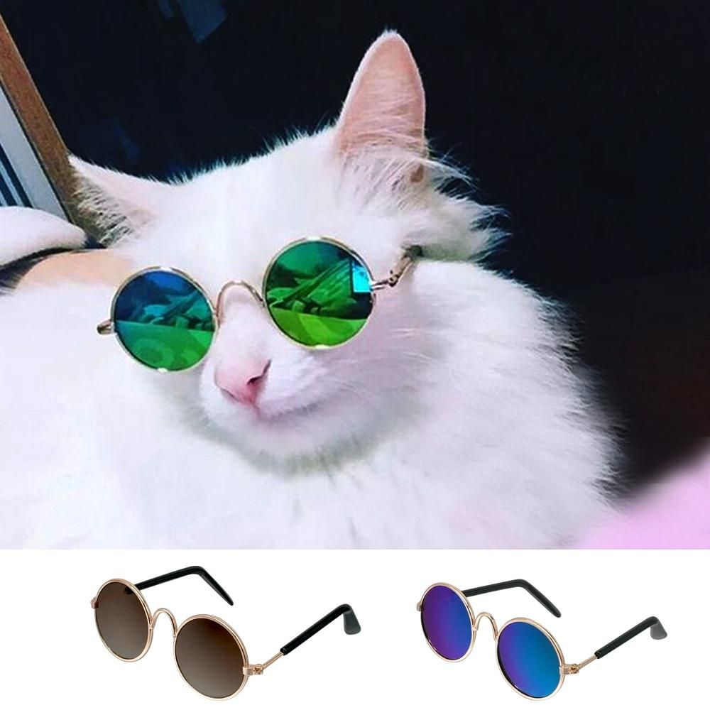 Cat Sunglasses Kitty Catlover Kitties Mainecoon Meow Cat Cats Kitten Cutecat Kittens Cat Glasses Pet Sunglasses Pet Fashion