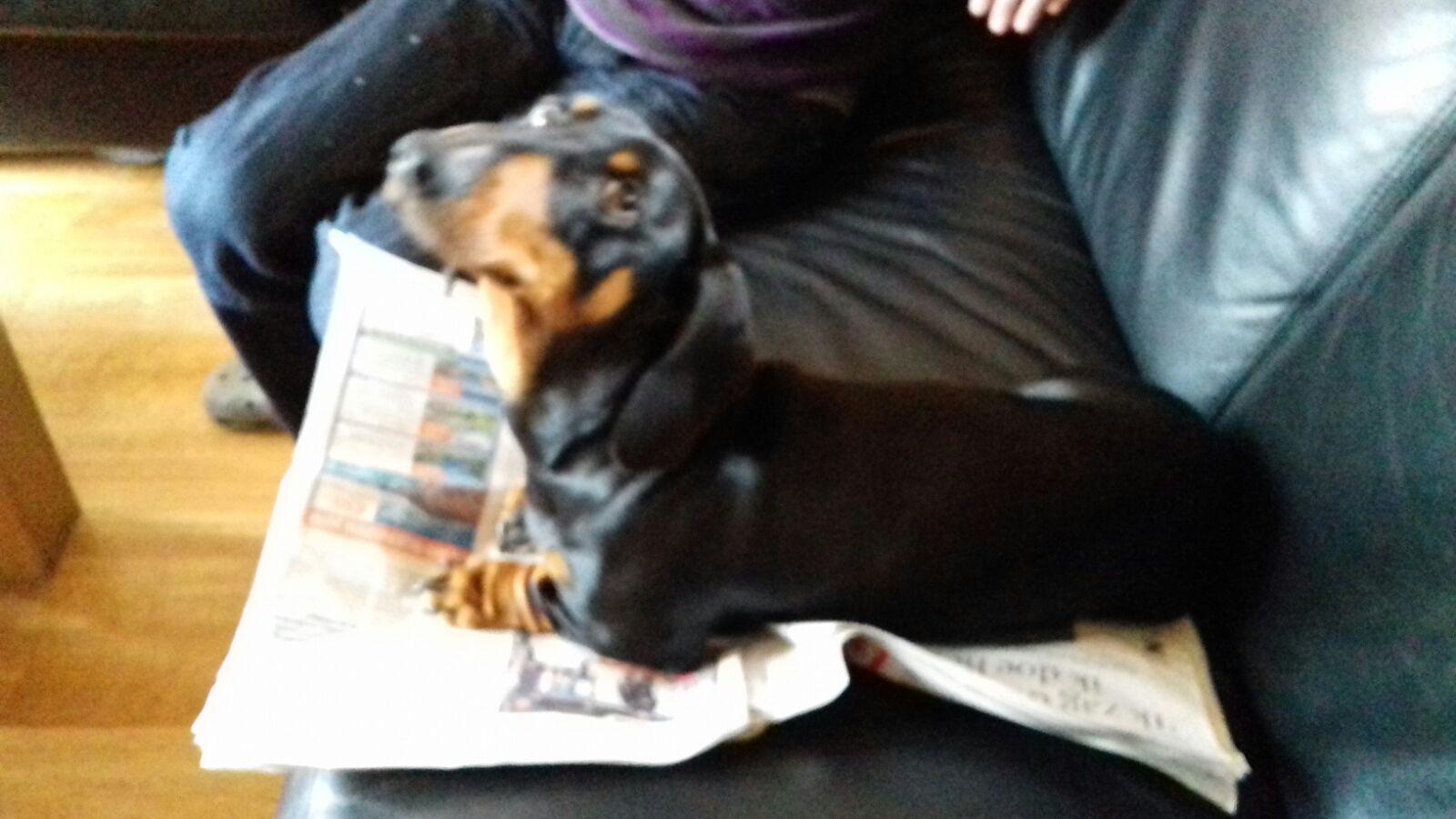 Touch Down FBP alias Utah Pets, Dachshund, Dogs