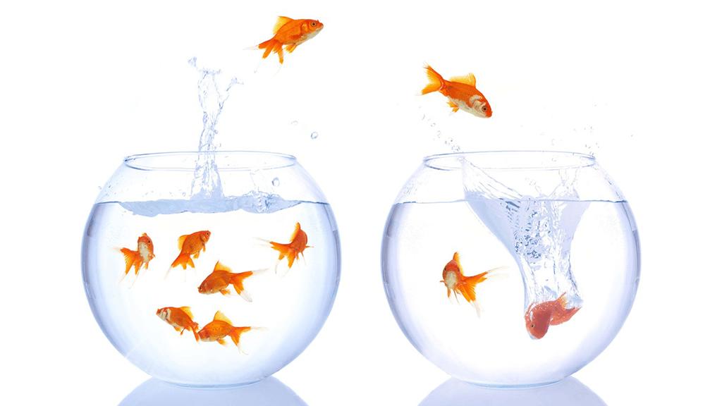 Top poissons rouges sautant d'un bocal à un autre | Changement de  JJ39