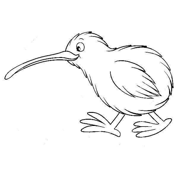 Cute kiwi bird coloring pages projects to try for Kiwi bird coloring page