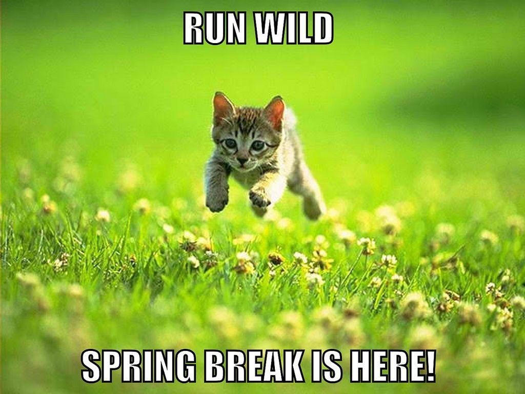 Spring Break Social Worker Problems Social Work Humor Social Worker