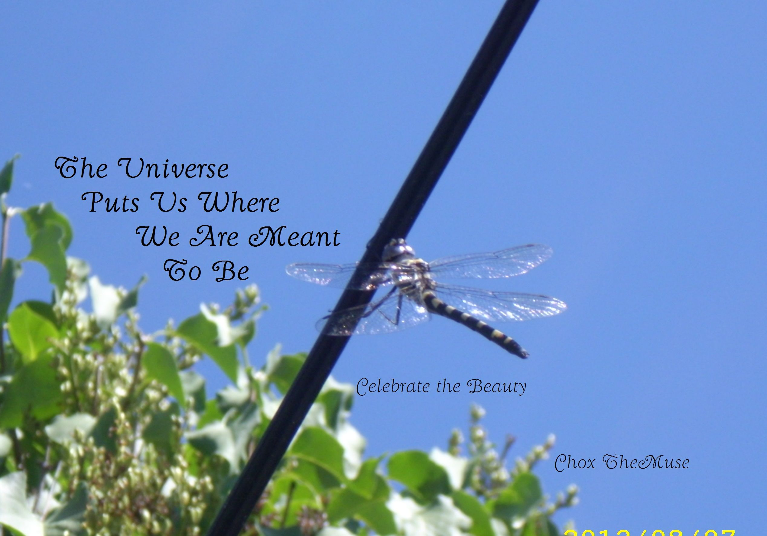 This Large Dragonfly came to visit one day! The Universe Puts Us Where We are Meant to Be! Nature is amazing! #Dragonfly
