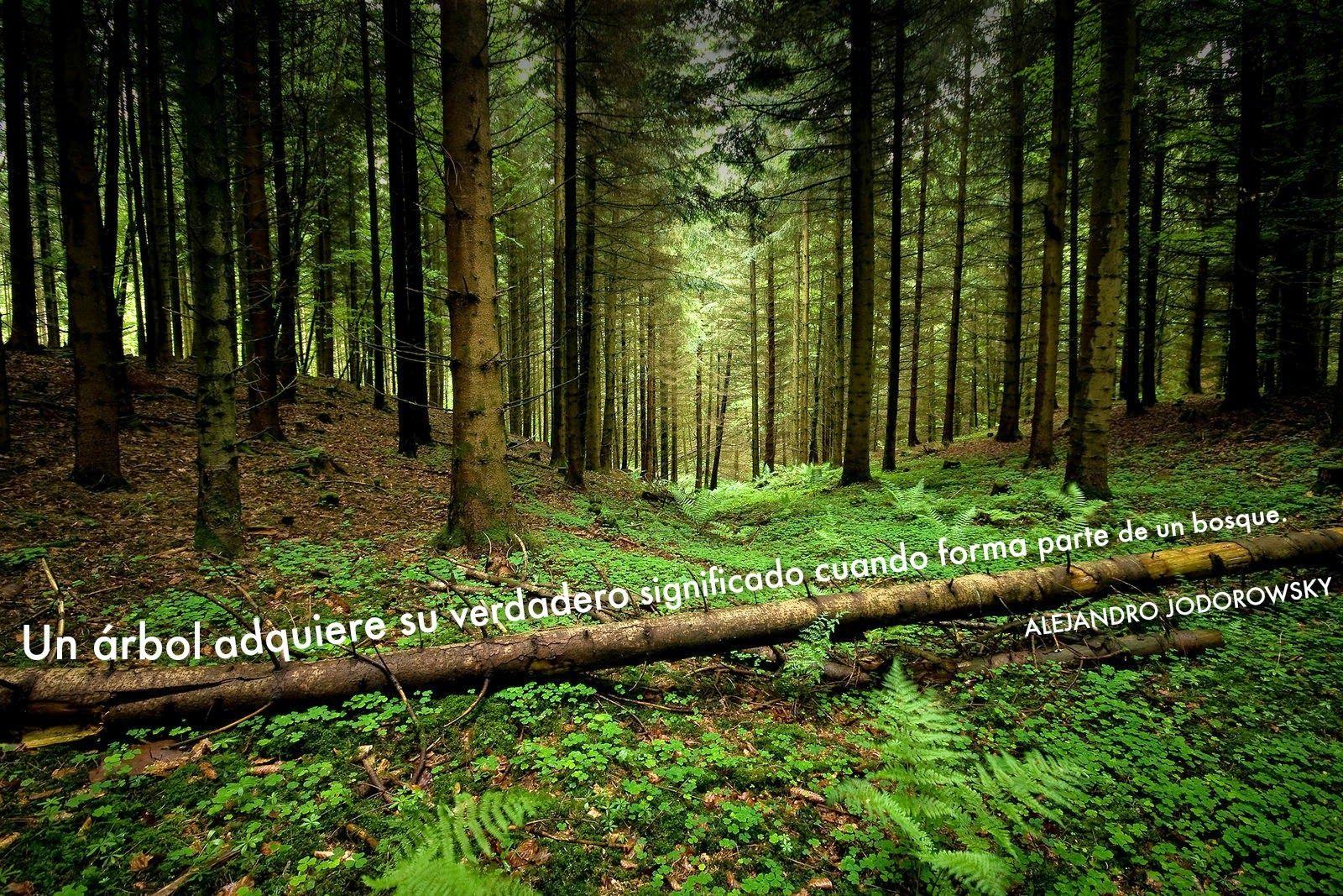 ... Un árbol adquiere su verdadero significado cuando forma parte de un bosque. Alejandro Jodorowsky. http://nubesdedosisdiarias.blogspot.com.es/2014/05/somos-bosque.html