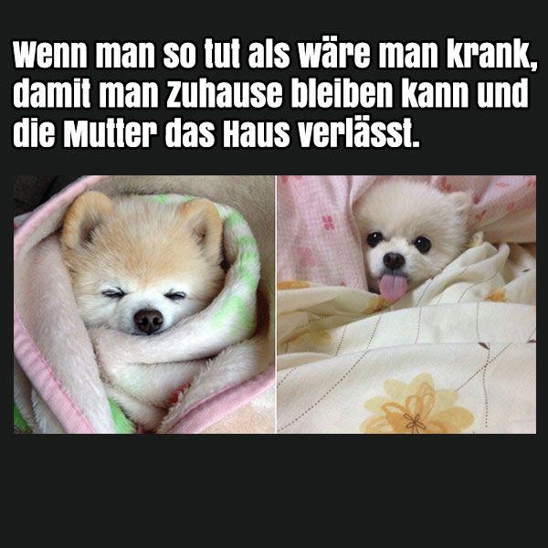 Pin von www.DieserEineSpruch.de Sprüche & mehr auf Lustige ...