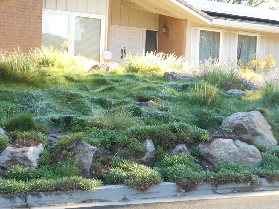 Landscaping Ideas San Francisco Bay Area - Native Plants of California -  Landscaping Bay Area Native Plants - Landscaping Ideas San Francisco Bay Area - Native Plants Of