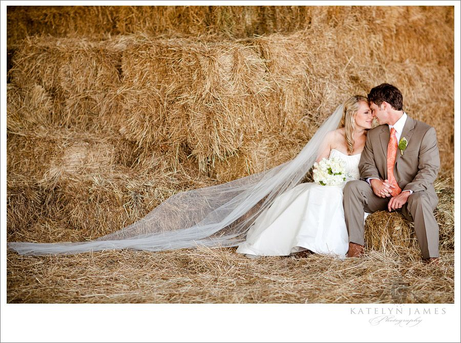bales of hay, bales of hay...where can i find some bales of hay...