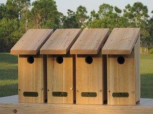 "The Backyard Bird Company's ""Habitat Essentials"" Basic ..."