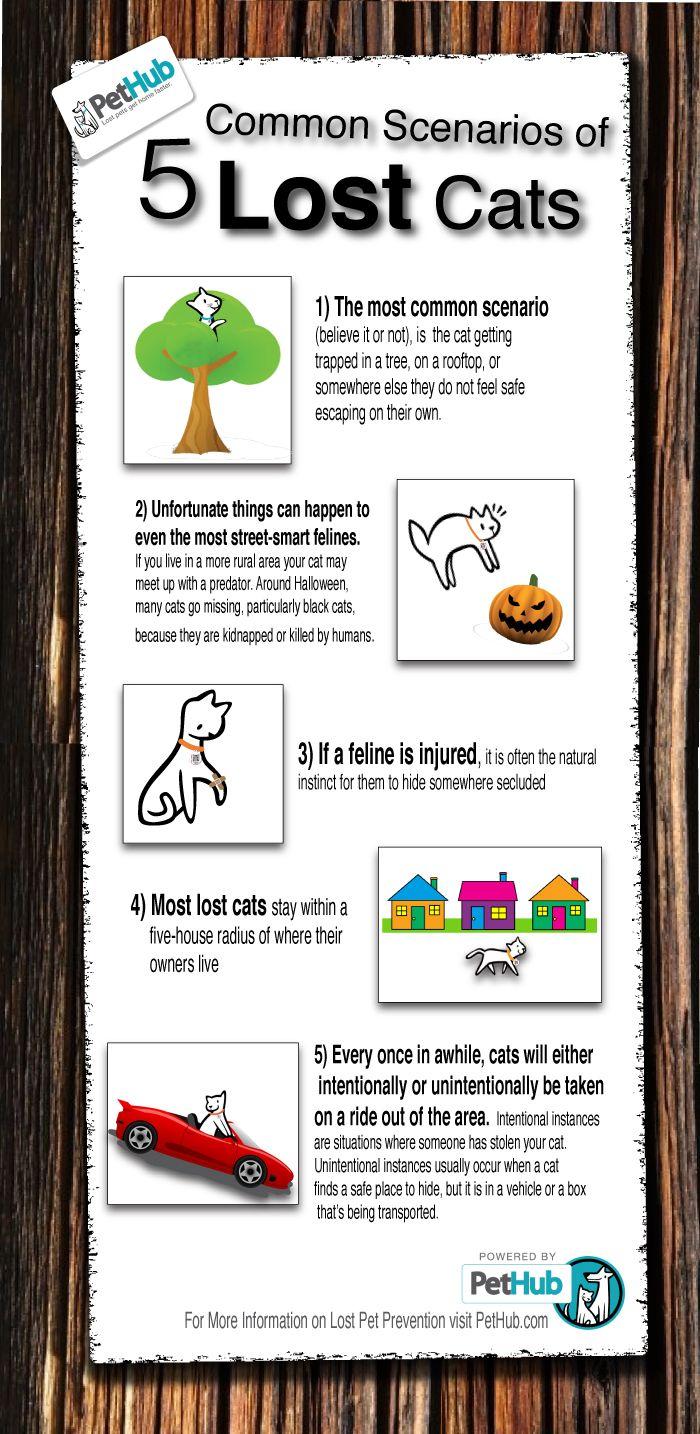 5 Common Scenarios Of Lost Cats Infographic Pethub Cat Infographic Lost Cat Lost Cat Poster