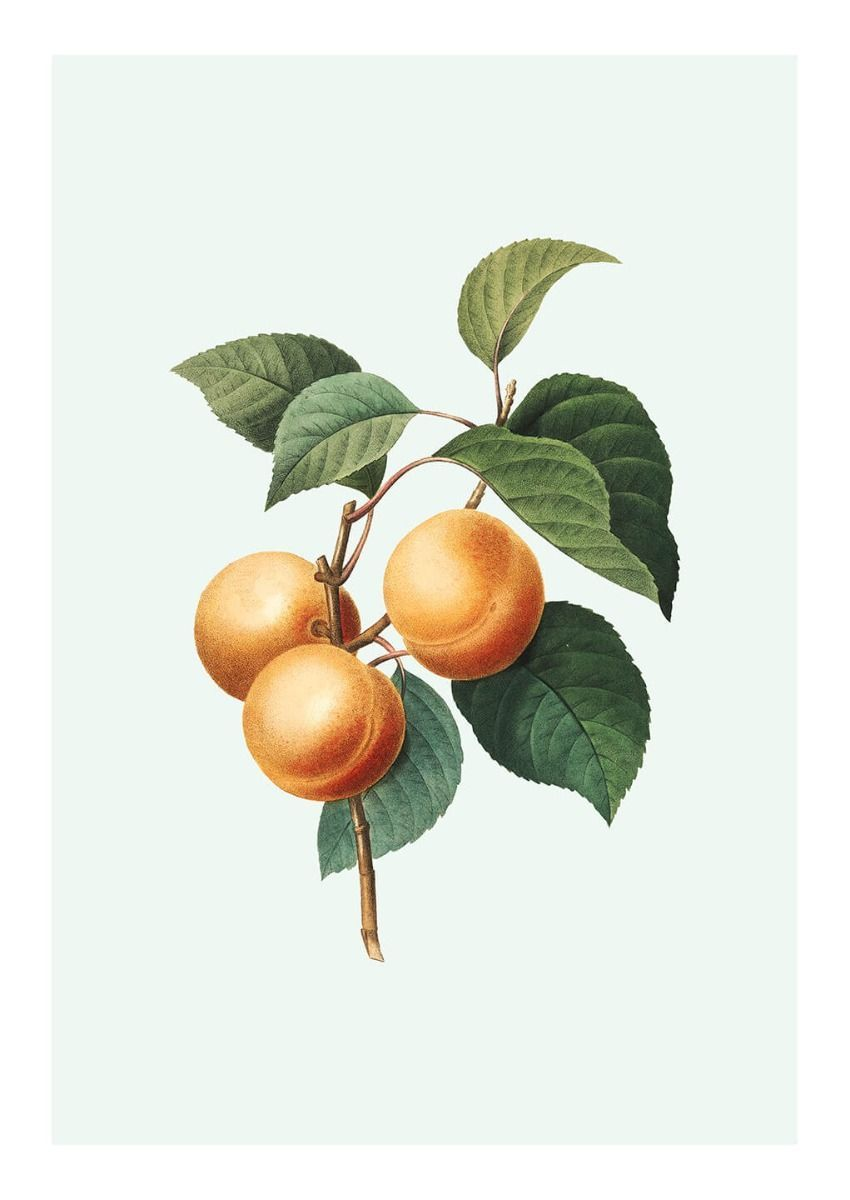 Apricot Poster in 2020 Picture frame inspiration