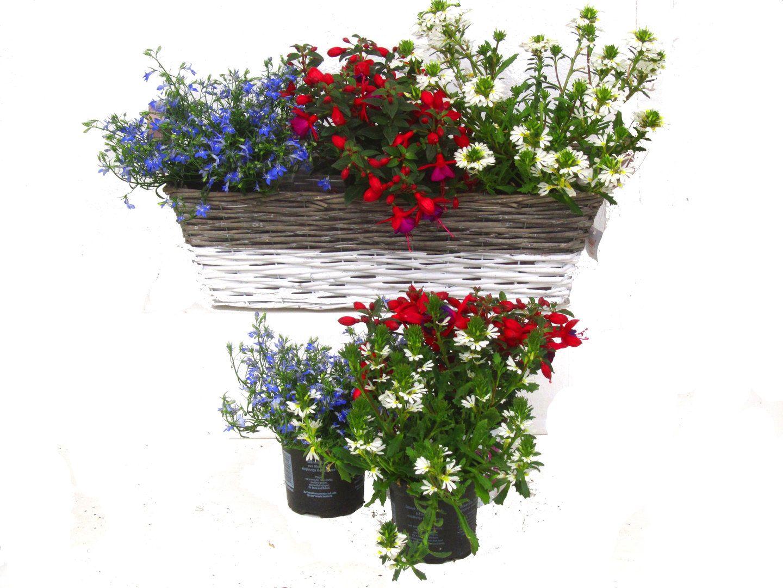 Balkonpflanzen Set Fur Balkonkasten 60 Cm Lang Schatten Bis