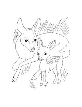 Roe Deers Deer Coloring Pages Animal Coloring Pages Horse Coloring Pages