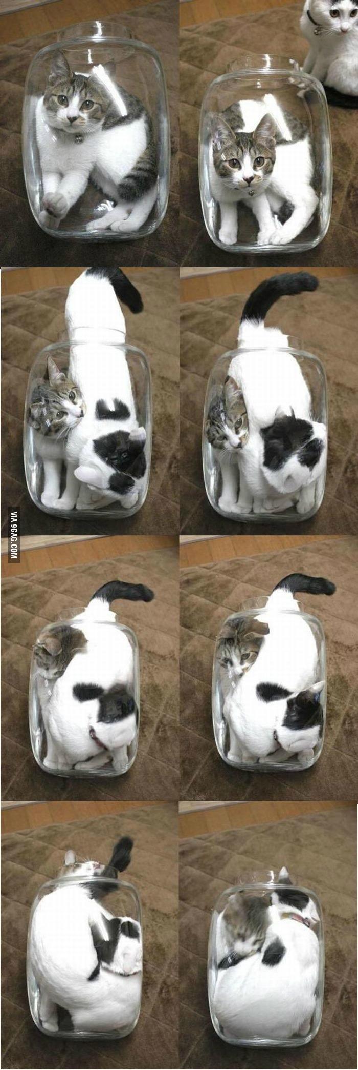 2 kittens in a glass jar Bonsai kitten, Kittens, Glass jars