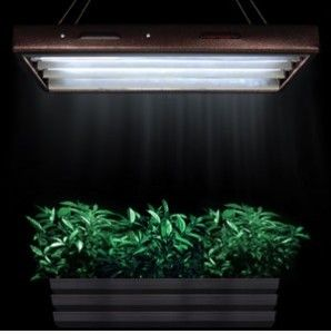 Plants Growing With 3000K Lamps In A T 5 Fluorescent 400 x 300