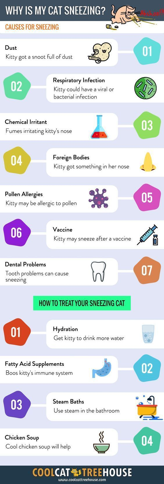 Why Your Cat Keeps Sneezing But Seems Fine
