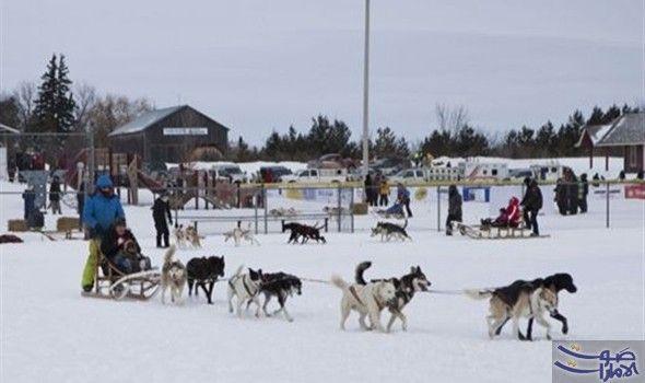 انطلاق سباق التزلج للكلاب في جبال الألب في ضوء النجوم على جبال الألب الفرنسية ينبح 500 كلب متلهف على بدء أحد أكثر سباقات التزلج تحديا في Dogs Husky Animals