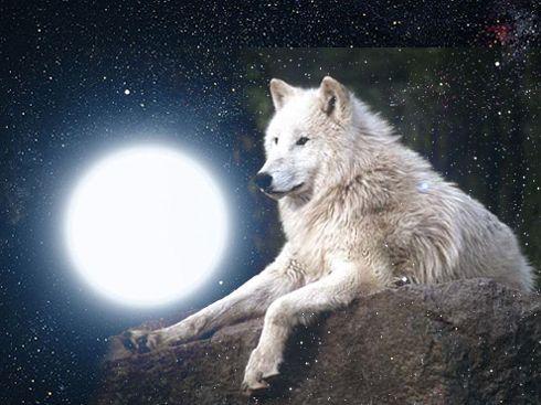 i lupi luna donna - Cerca con Google