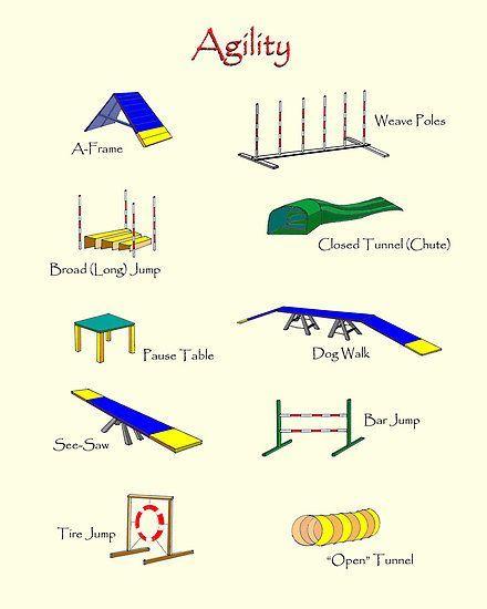 dog agility equipment agility equipment by brad a With best dog agility equipment